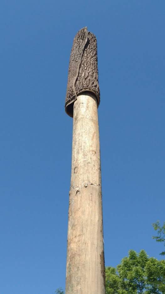 Close-Up of Post with Bark on End