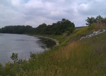 Wide Grassy River Edge