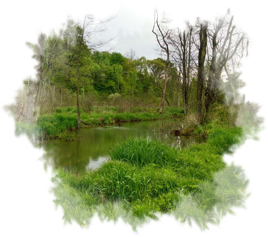 River in Wetlands
